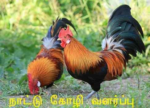Nattu Kozhi Valarpu Books in Tamil PDF - Free Download